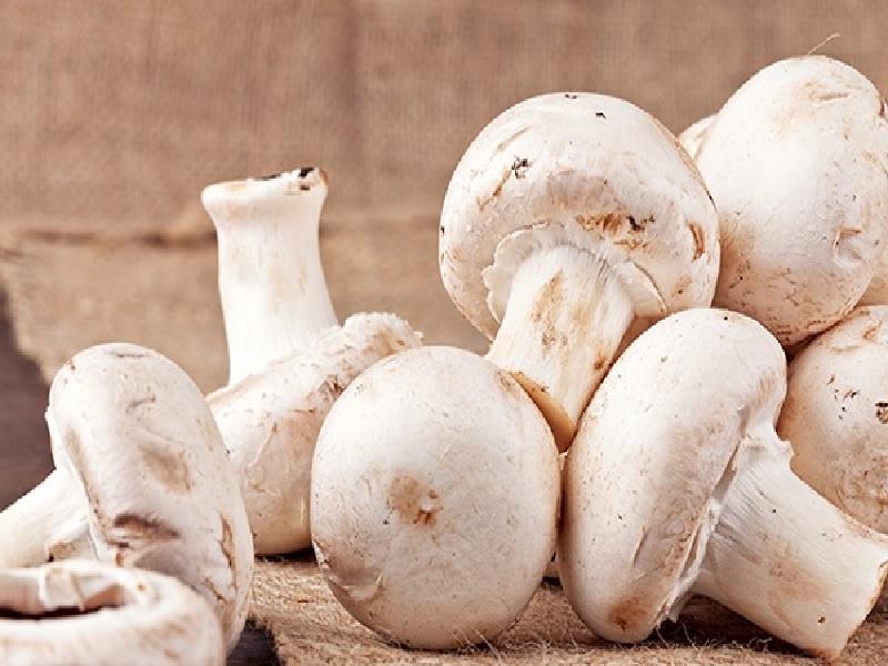 Konsumsi Jamur Bantu Lindungi Otak Dari Alzheimer