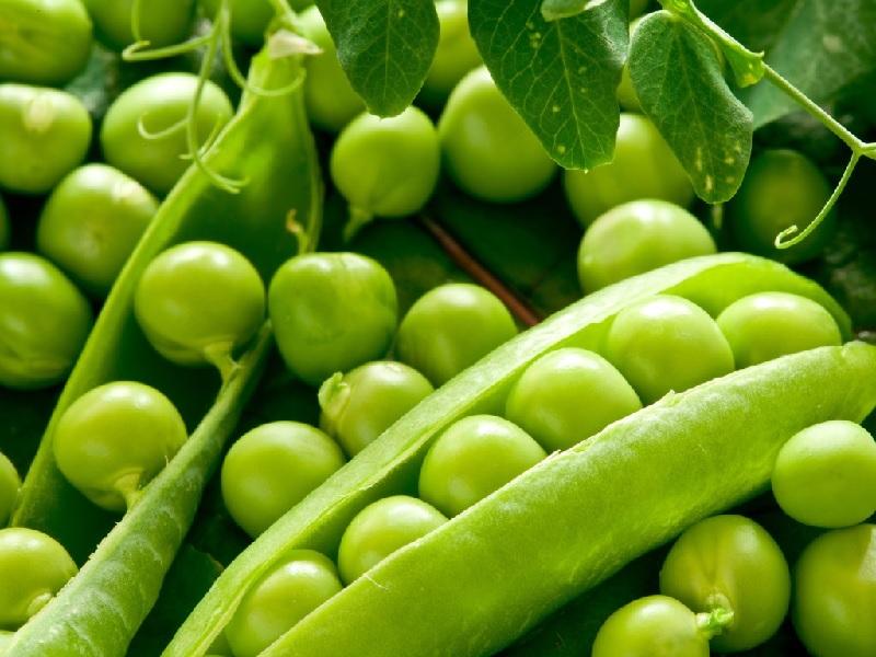Suka Ngemil Kacang Polong, Ini Manfaatnya Untuk Kesehatan